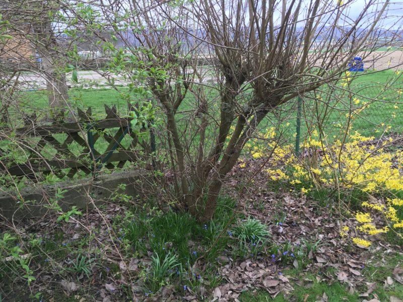 Berühmt Immer mehr essbare Wildpflanzen in meinem Repertoire Mein #DF_44